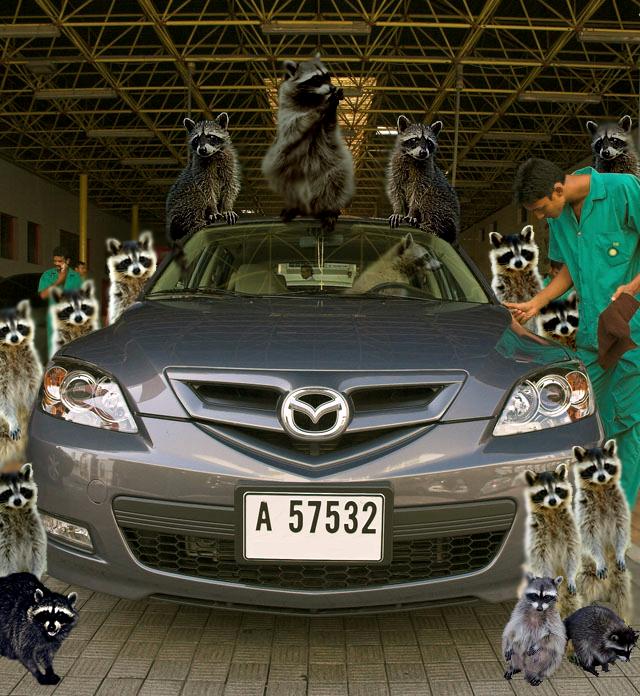 RaccoonCarWash-2.png
